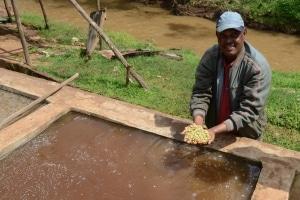 Terra Kahwa lavage cerises de café ethiopien